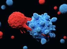 3d render of an immune system T cell killing a cancer cell
